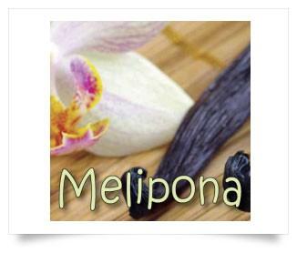 Melipona